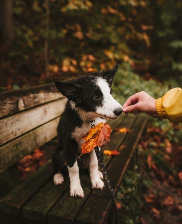dog fall leaf